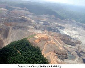pds_forest_destruction