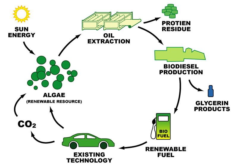 "research paper algae biodiesel The authors report a variety of engine tests performed by researchers who studied different ratios of original diesel fuel mixed with biodiesel or pure biodiesel obtained from microalgae blends tested have ranged from a ""b5"" (5% biodiesel, 95% diesel fuel) to ""b50"" (50% biodiesel, 50% diesel fuel) in one."