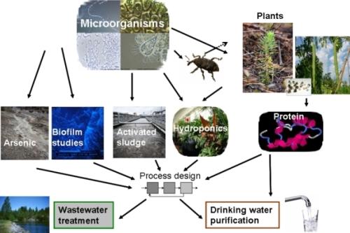 micro_organism